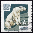 Postage stamp Russia 1964 Polar Bear, Animal — Stock fotografie