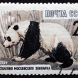Postage stamp Russia 1964 Giant Panda, Animal — Stock Photo #26998317