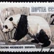 Postage stamp Russia 1964 Giant Panda, Animal — Stock Photo #26998317