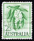Postage stamp Australia 1959 Golden Wattle, Tree — Stock Photo