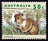 Postage stamp Australia 1992 Koala, Herbivorous Marsupial — Stock Photo