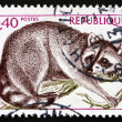Постер, плакат: Postage stamp France 1973 Guadeloupe Raccoon Animal