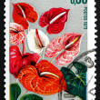 Postage stamp France 1973 Anthurium, Flamingo Flower — Stock Photo #27632453