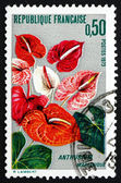 Postage stamp France 1973 Anthurium, Flamingo Flower — Stock Photo