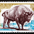 Stock Photo: Postage stamp France 1974 EuropeBison, Bison Bonasus