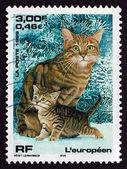 Znaczek francji 1999 kot europejski, zwierzę — Zdjęcie stockowe