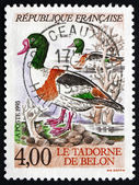 Postage stamp France 1993 Common Shelduck, Water Bird — Stock Photo
