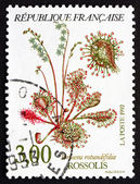 Postage stamp France 1992 Common Sundew, Carnivorous Plant — Stock Photo
