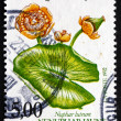 Postage stamp France 1992 Yellow Water-lily, Aquatic Plant — Stock Photo
