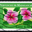 Postage stamp France 2000 Madagascar Periwinkles, Perennial Plan — Stock Photo