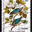 Postage stamp France 1995 Band-tailed Pigeon, Bird — Stock Photo