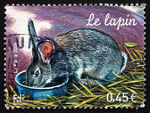 Postage stamp France 2004 Rabbit, Farm Animal — Stock Photo