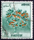 Postage stamp Pakistan 1957 Orange Tree — Stock Photo
