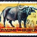 Постер, плакат: Postage stamp Burundi 1964 African Buffalo Syncerus Caffer