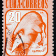 Stock Photo: Postage stamp Cub1981 Almiqui, CubSolenodon, Mammal