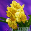 Stock Photo: Yellow orchid in glass vase on violet background