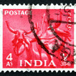 Stock Photo: Postage stamp Indi1955 Bullock Team