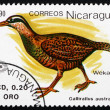 Postage stamp Nicaragua 1990 Weka, Flightless Bird — Stock Photo