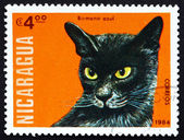 Postage stamp Nicaragua 1984 Blue Burmese, Domestic Cat — Stock Photo