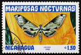 Postage stamp Nicaragua 1983 Pholus Licaon, Nocturnal Moth — Stock Photo