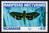 Postage stamp Nicaragua 1983 Xilophanes Chiron, Nocturnal Moth — Stock Photo