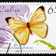 Postage stamp Cuba 1995 Black-striped White, Butterfly — Stock Photo