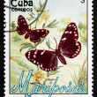 Stock Photo: Postage stamp Cub1991 Faithful Beauty, Moth