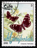 Postage stamp Cuba 1991 Faithful Beauty, Moth — Stock Photo