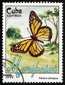 Postage stamp Cuba 1991 Monarch Butterfly, Butterfly — Stockfoto