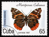 Postage stamp Cuba 1997 Red Admiral, Butterfly — Stock Photo