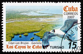 Postage stamp Cuba 2007 Cayo Las Brujas and Sea Gull — Stock Photo