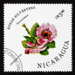 Stock Photo: Postage stamp Nicaragu1986 Sweet Briar, RosEglanteria, Flowe