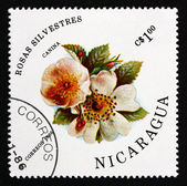 Postage stamp Nicaragua 1986 Dog Rose, Rosa Canina, Flower — Stock Photo
