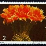 Постер, плакат: Postage stamp Guyana 1988 Echinopsis Cactus Flower