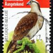 Postage stamp Belgium 2011 Osprey, Sea Hawk, Bird — Stock Photo