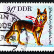 Postage stamp GDR 1976 German Shepherd, Dog — Stock Photo