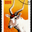 Postage stamp GDR 1970 White Antelope, Addax — Stock Photo