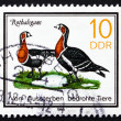 Postage stamp GDR 1985 Red-breasted Goose, Bird — Stock Photo