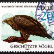 Postage stamp GDR 1982 SeEagle, Bird of Prey — Stock Photo #35270969