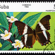Postage stamp Cuba 1984 Victorina, Butterfly — Stock Photo
