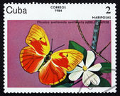 Postage stamp Cuba 1984 Red-Splashed Sulphur, Butterfly — Stock Photo