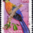 Postage stamp South Africa 2000 Purple-crested Lourie — Stock Photo