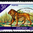 Postage stamp Dahomey 1968 Lion, Panthera Leo — Stock Photo