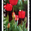 Postage stamp Australia 1994 Tulips, Thinking of You, Valentine — 图库照片