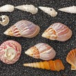 Shells on black — Stock Photo #36789497