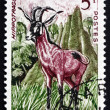 Postage stamp Senegal 1960 Roan Antelope, Savanna Antelope — Stock Photo