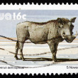 Stock Photo: Postage stamp South West Afric1987 Warthog, Wild Pig