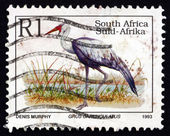 Postage stamp South Africa 1993 Wattled Crane, Bird — Zdjęcie stockowe