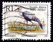Postage stamp South Africa 1993 Wattled Crane, Bird — Stock Photo