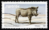 Postage stamp South West Africa 1987 Warthog, Wild Pig — Stock Photo